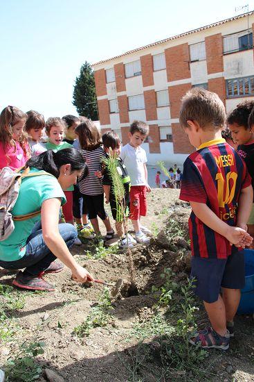 2015_Plantación_CEIP_Cervantes_007